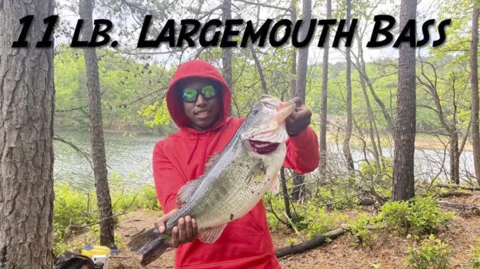 11-pound bass