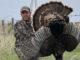 200 turkeys