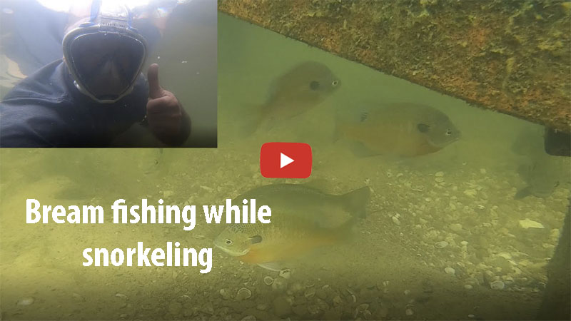 bream fishing while snorkeling