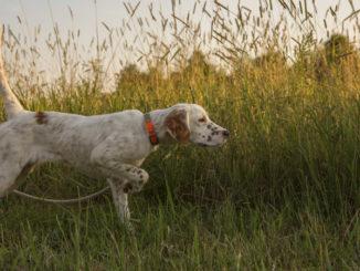 Bird Dog Training Areas